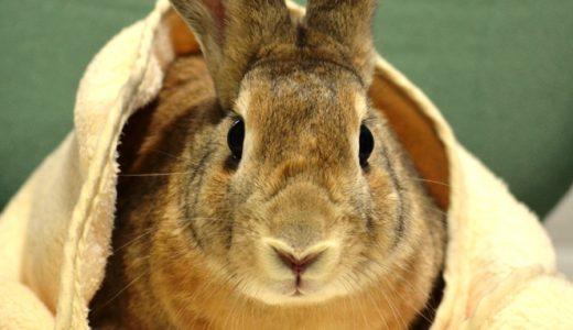 らいおん動物病院ブログ更新しました