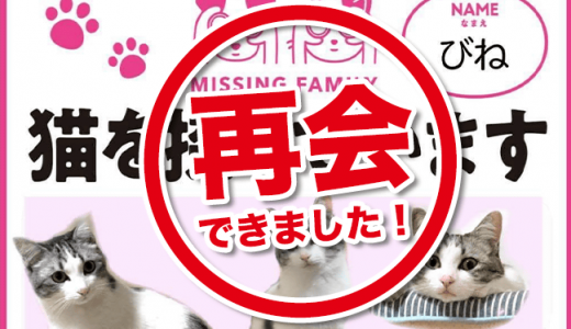 【解決済】猫を探しています(迷子:高岡町付近)